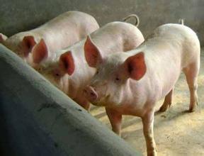 生猪价格走势