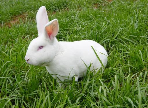 獭兔最新行情_2015年4月3日全国各地今日獭兔最新价格行情走势分析